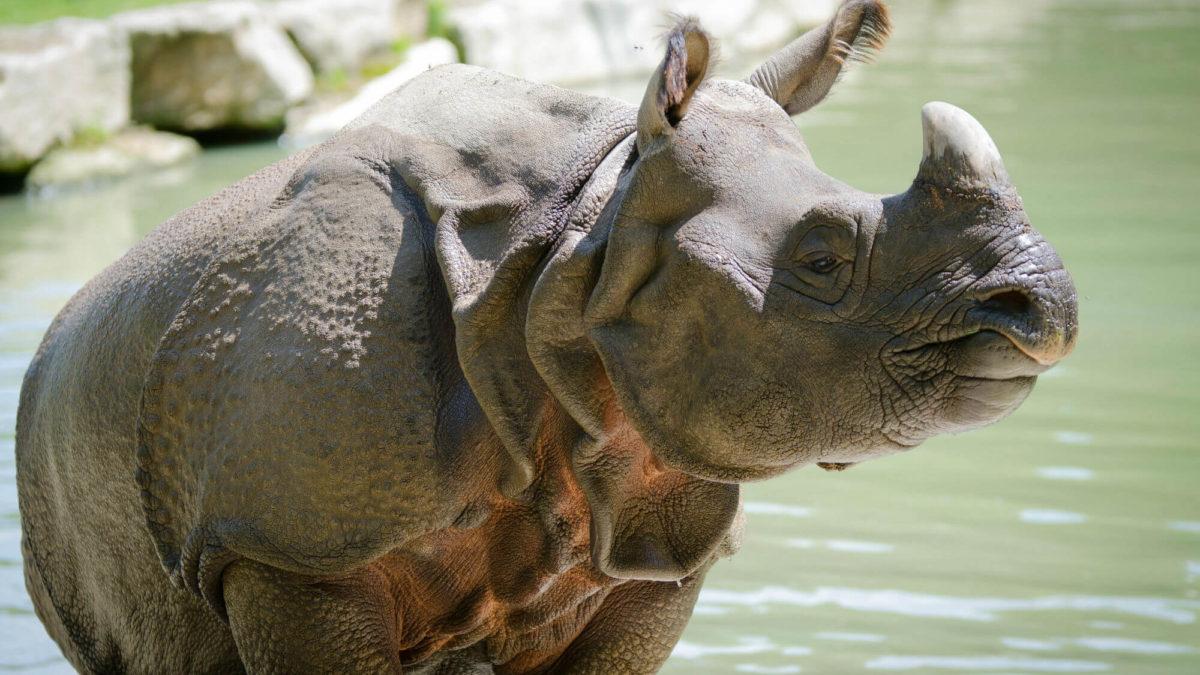 rhinocéros concours photo 2017