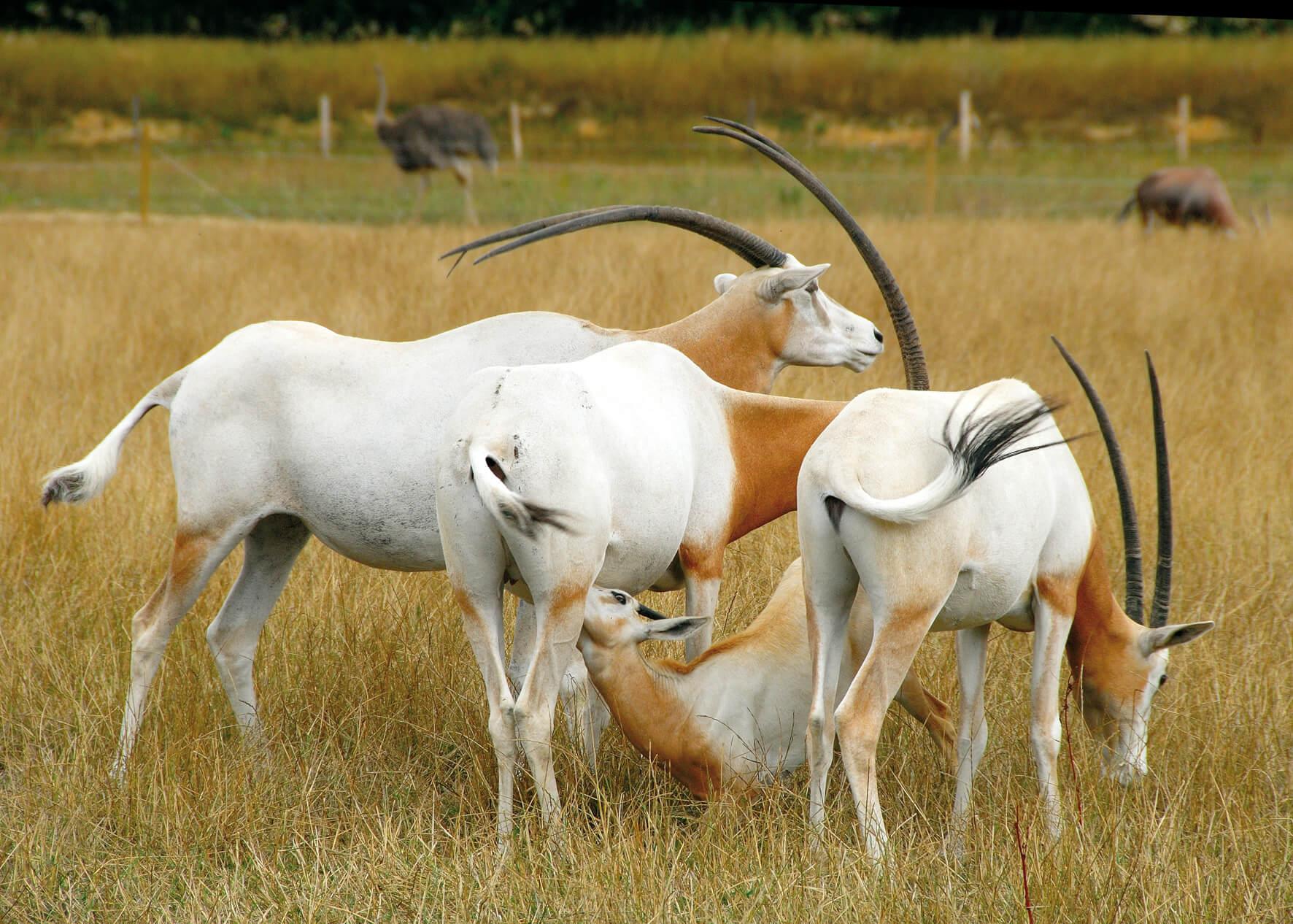 Carte Cezam Kingoland.Tarifs Et Prix D Entree Au Parc Animalier Et Botanique De Branfere