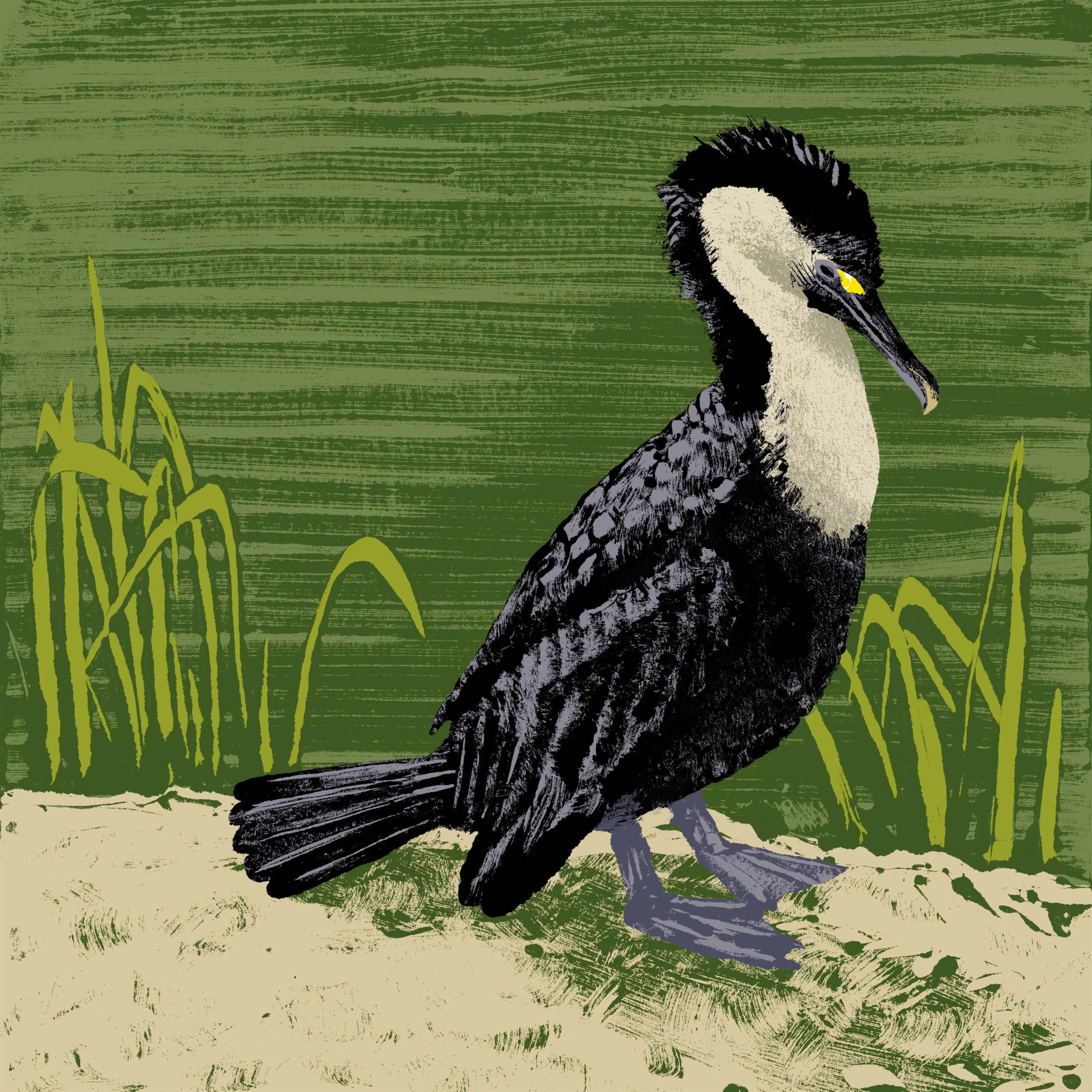 Le cormoran à cou blanc parc animalier de Branféré