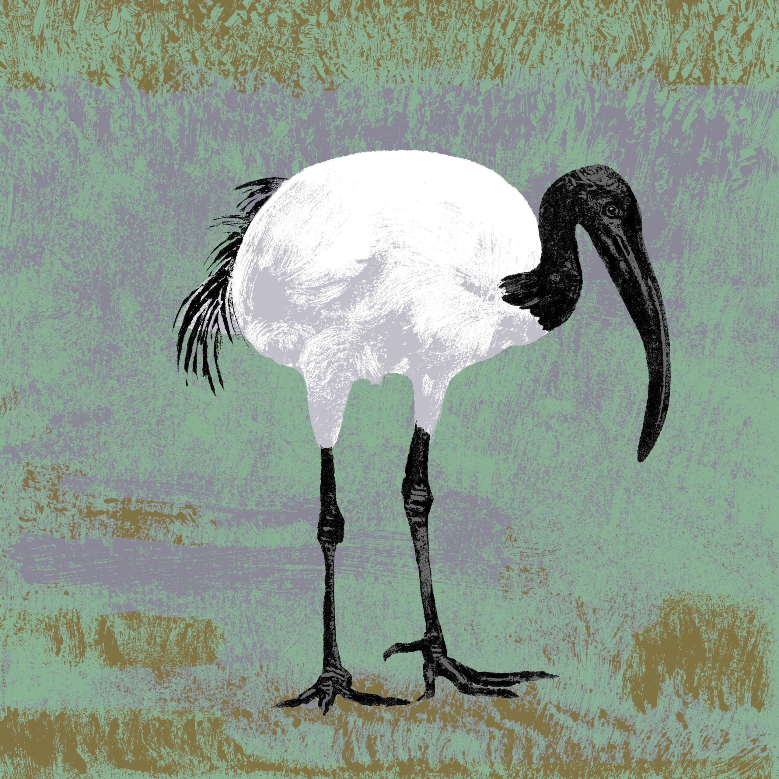 L'ibis sacré parc animalier de Branféré