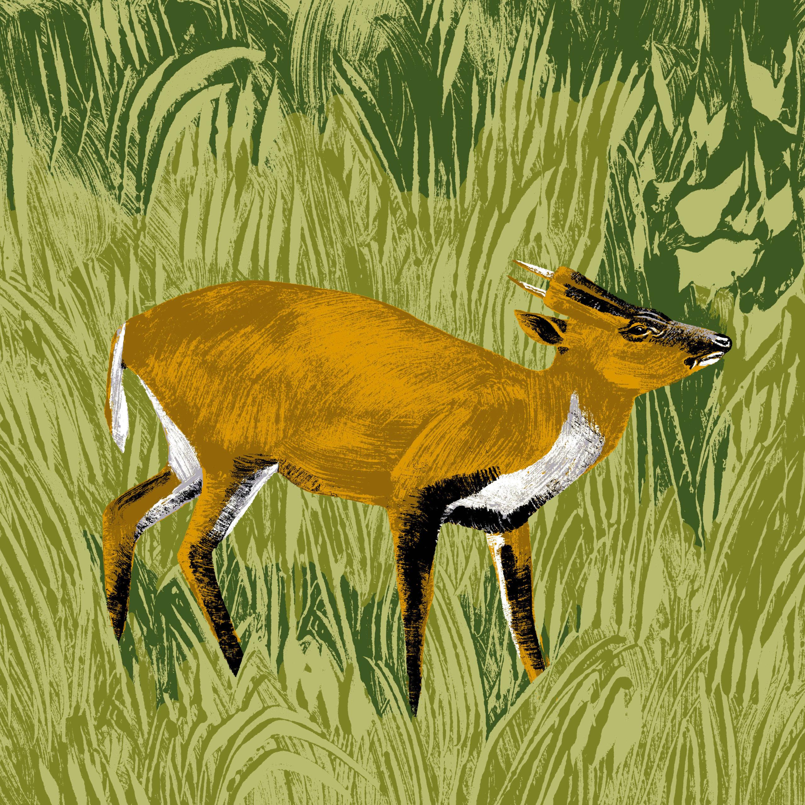 Le cerf muntjac de Chine parc animalier de Branféré