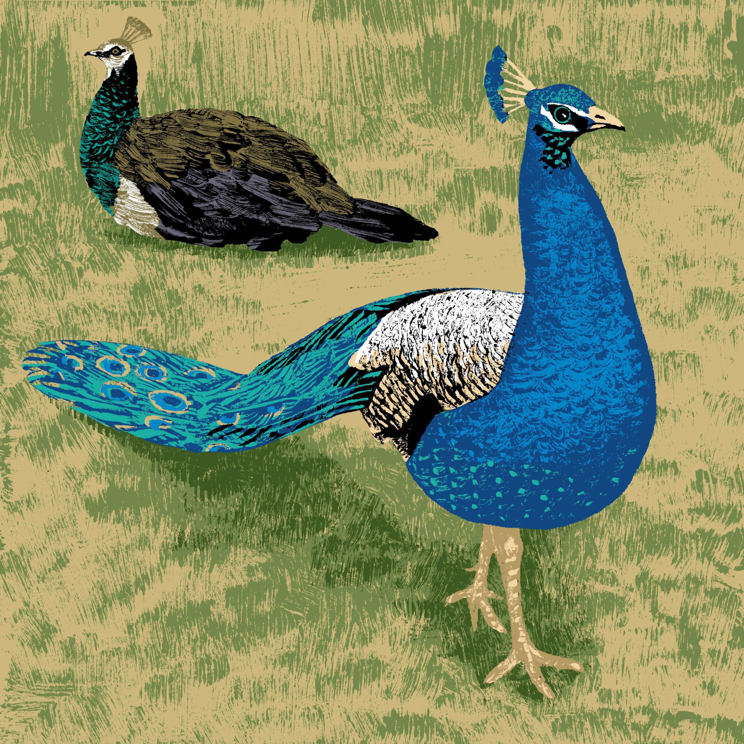 Le paon bleu parc animalier de Branféré