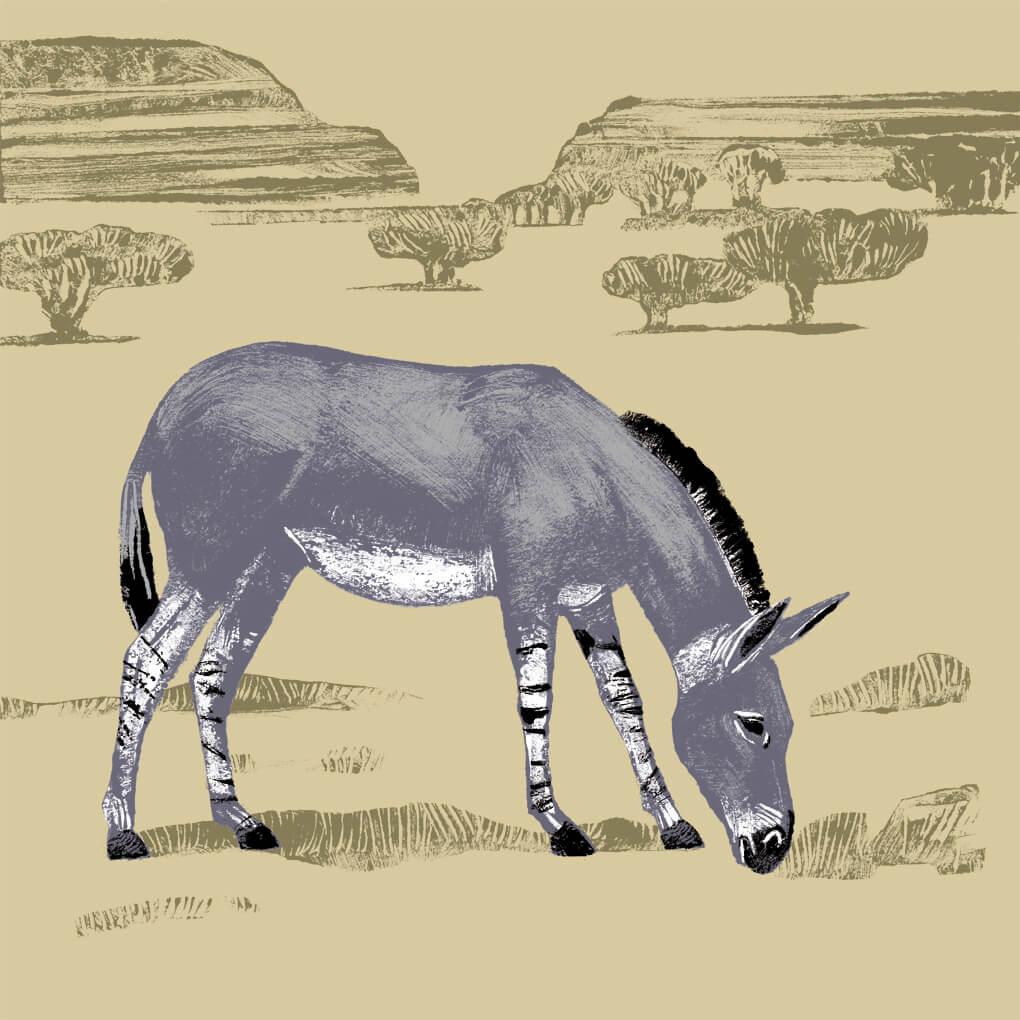 Âne de Somalie parc animalier de Branféré