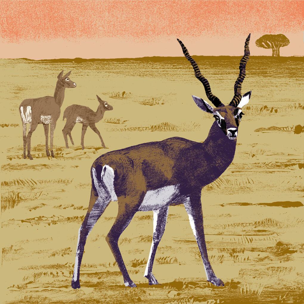 L'antilope cervicapre parc animalier de Branféré