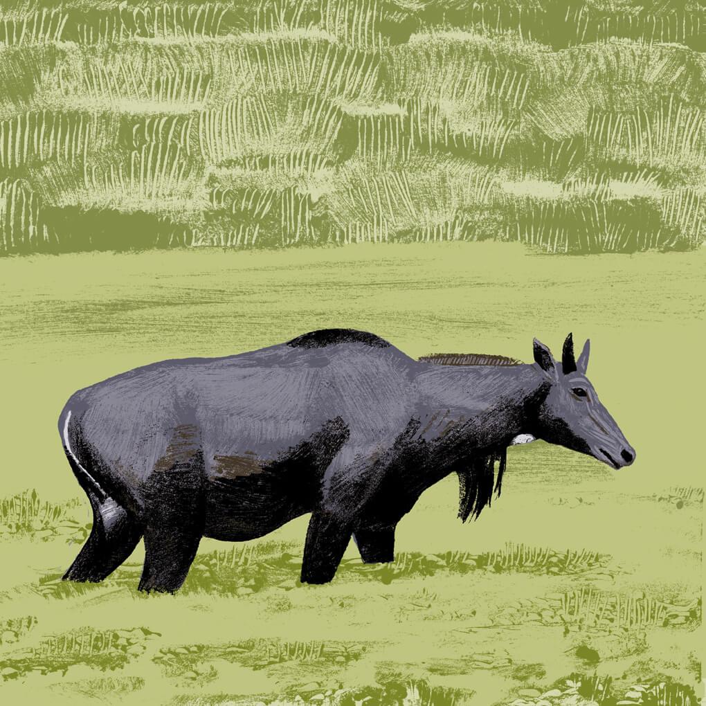 Le nilgault parc animalier de Branféré