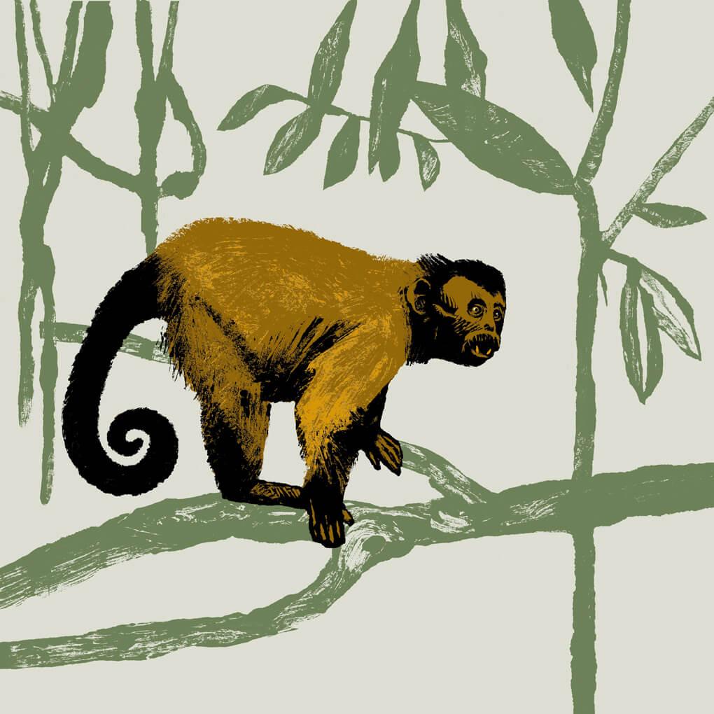 capucin brun parc animalier de Branféré