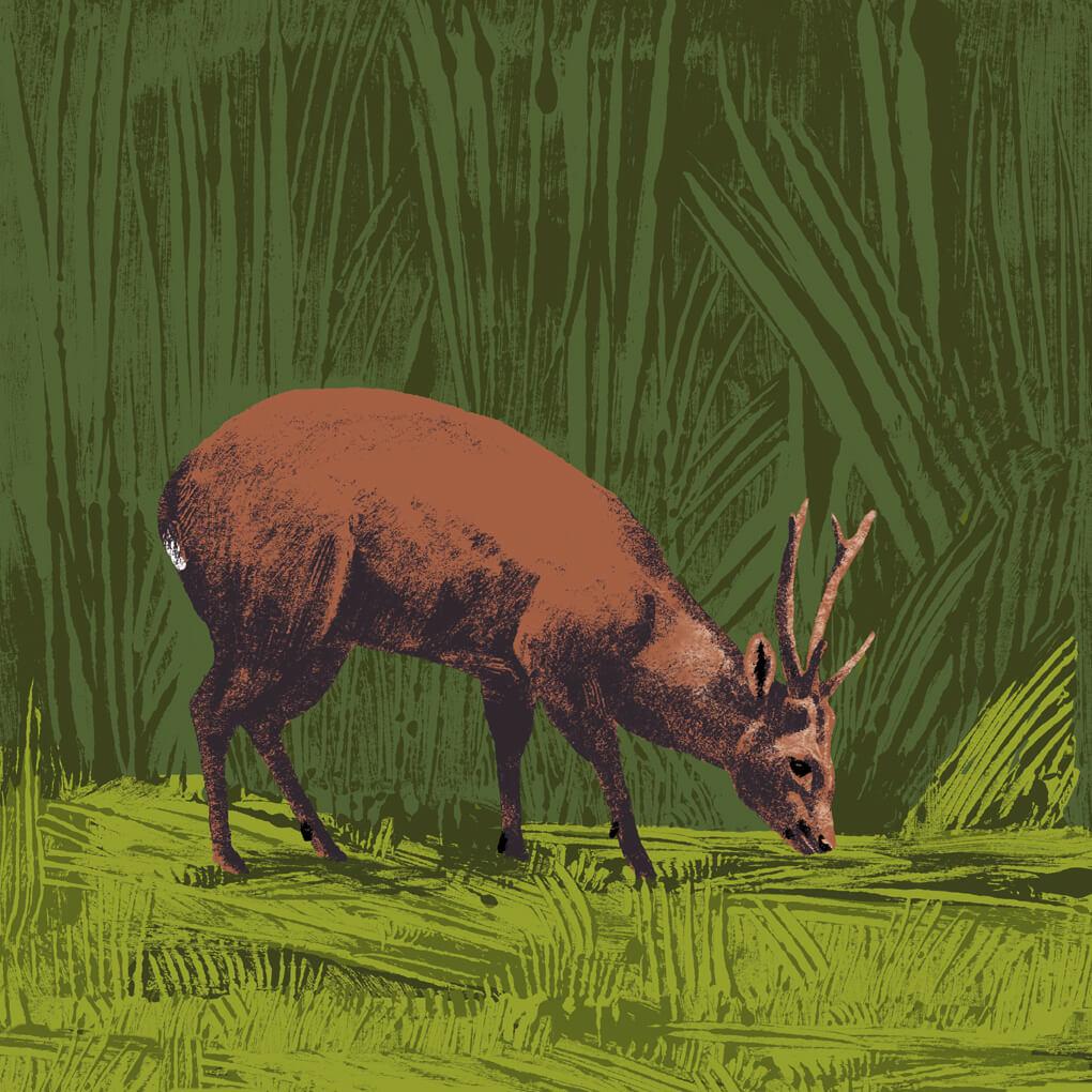 cerf cochon parc animalier de Branféré