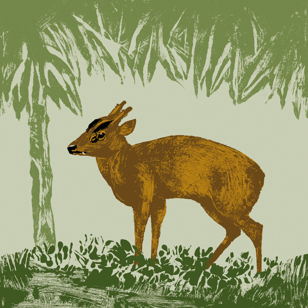 Le cerf Muntjac d'Inde parc animalier de Branféré