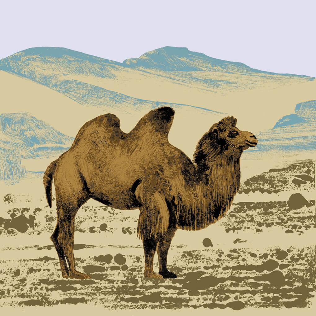 Le chameau parc animalier de Branféré