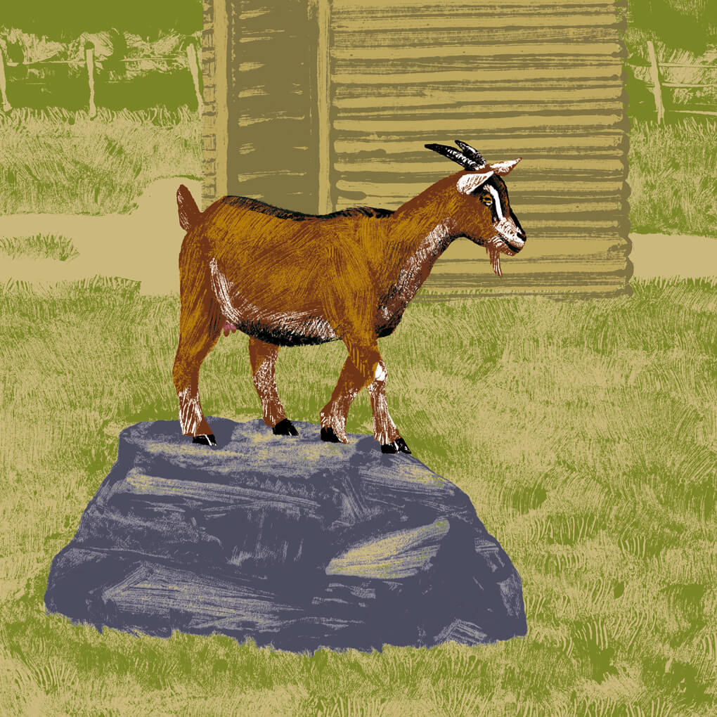 La chèvre naine parc animalier de Branféré