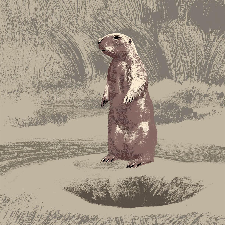 chien de prairie branfere