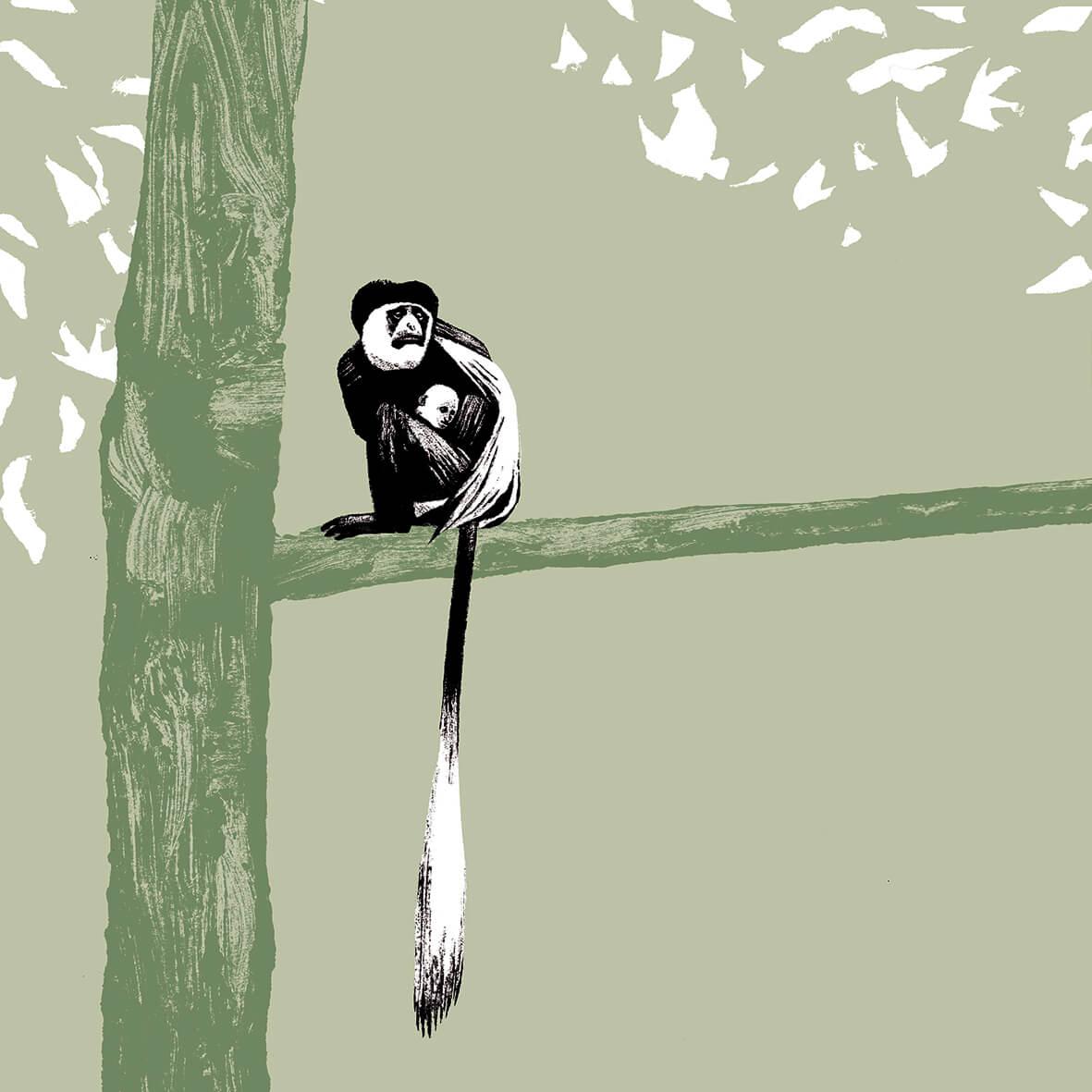 Le colobe de Guéréza parc animalier de Branféré