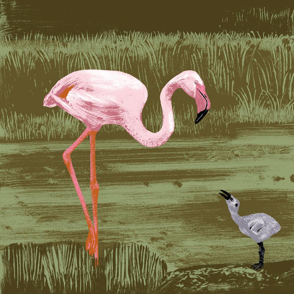 flamant rose parc animalier de Branféré