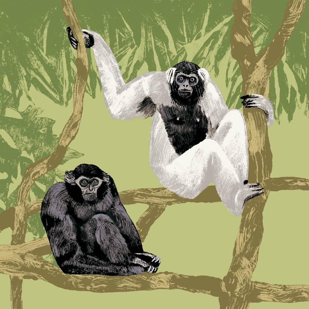 gibbon à bonnet parc animalier de Branféré