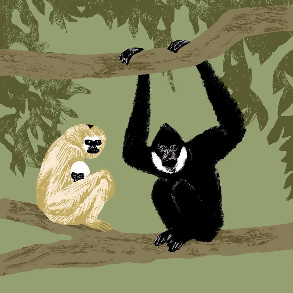 Le gibbon à favoris blancs parc animalier de Branféré