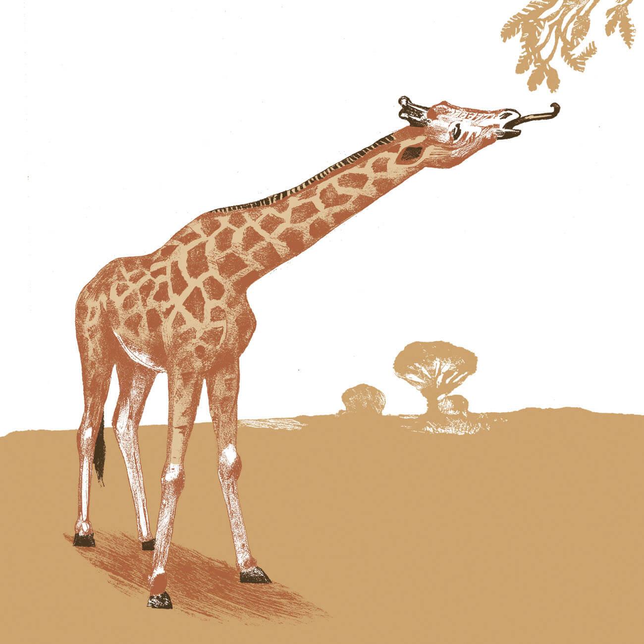 girafe parc animalier de Branféré