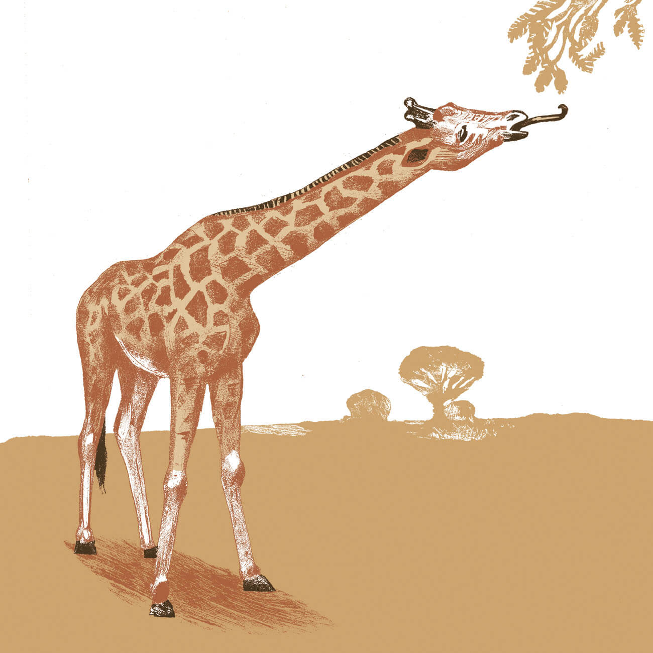 girafe branfere