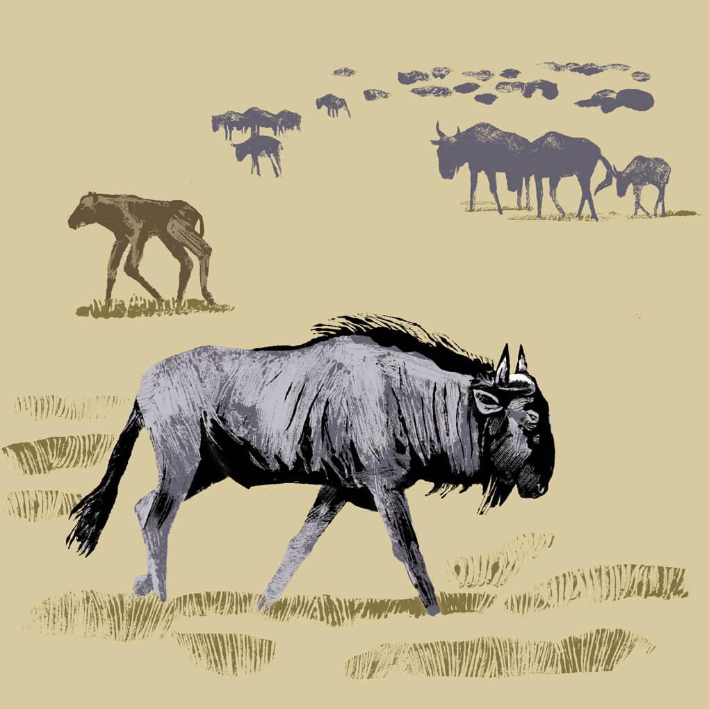 Le gnou bleu parc animalier de Branféré
