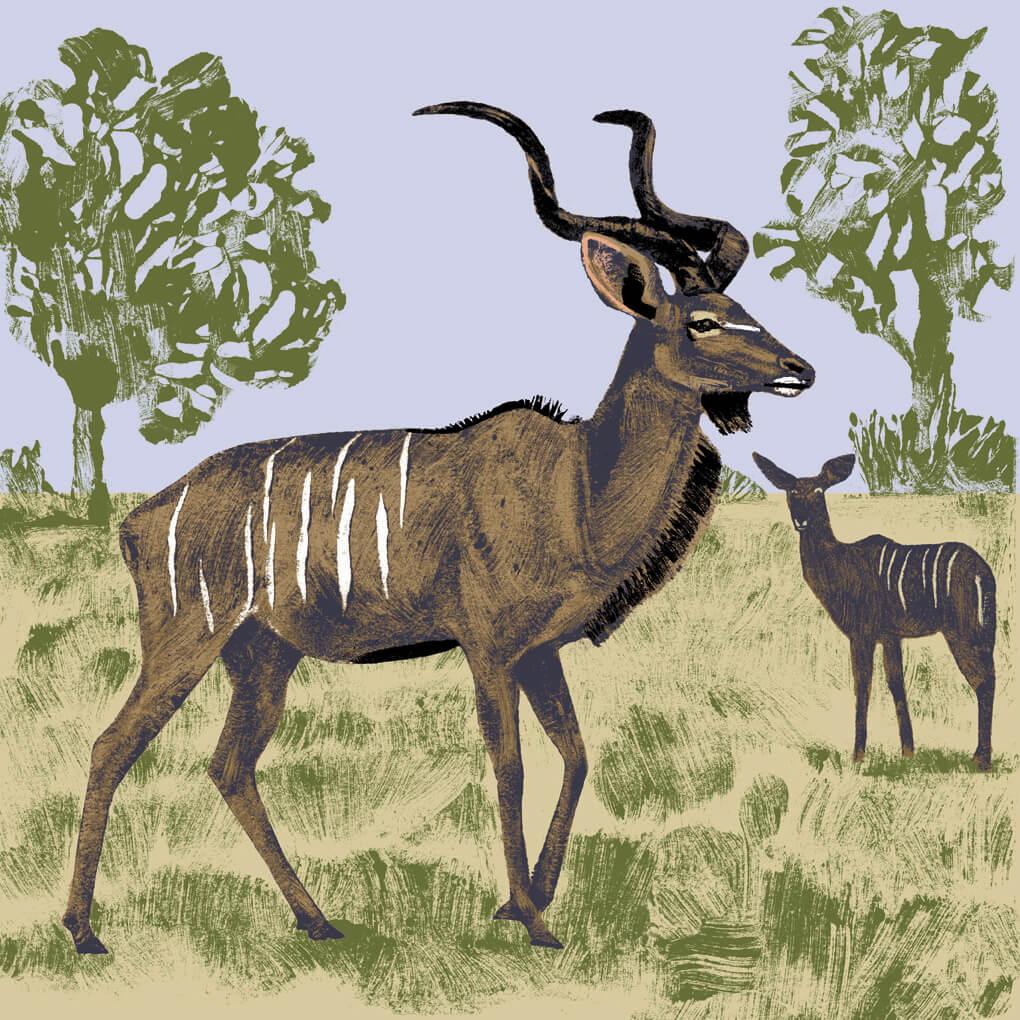 Le grand koudou parc animalier de Branféré