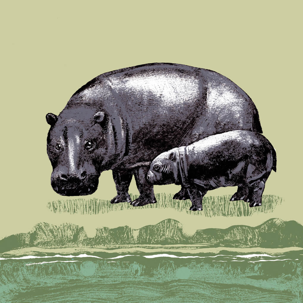 L'hippopotame pygmée parc animalier de Branféré