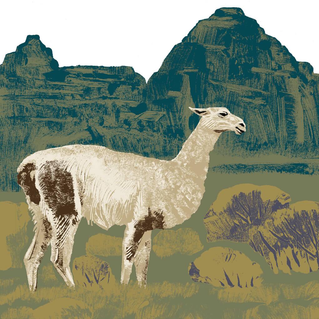 lama parc animalier de Branféré