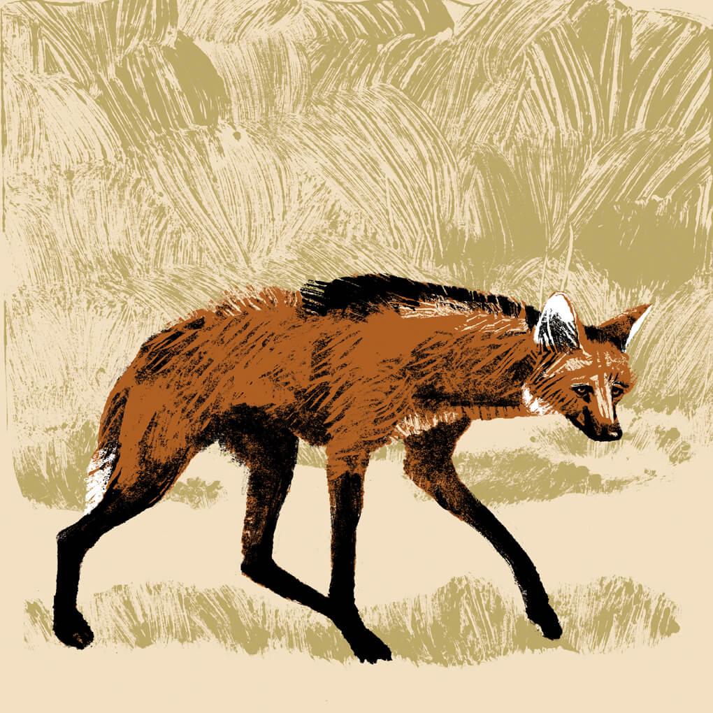 loup à crinière parc animalier de Branféré