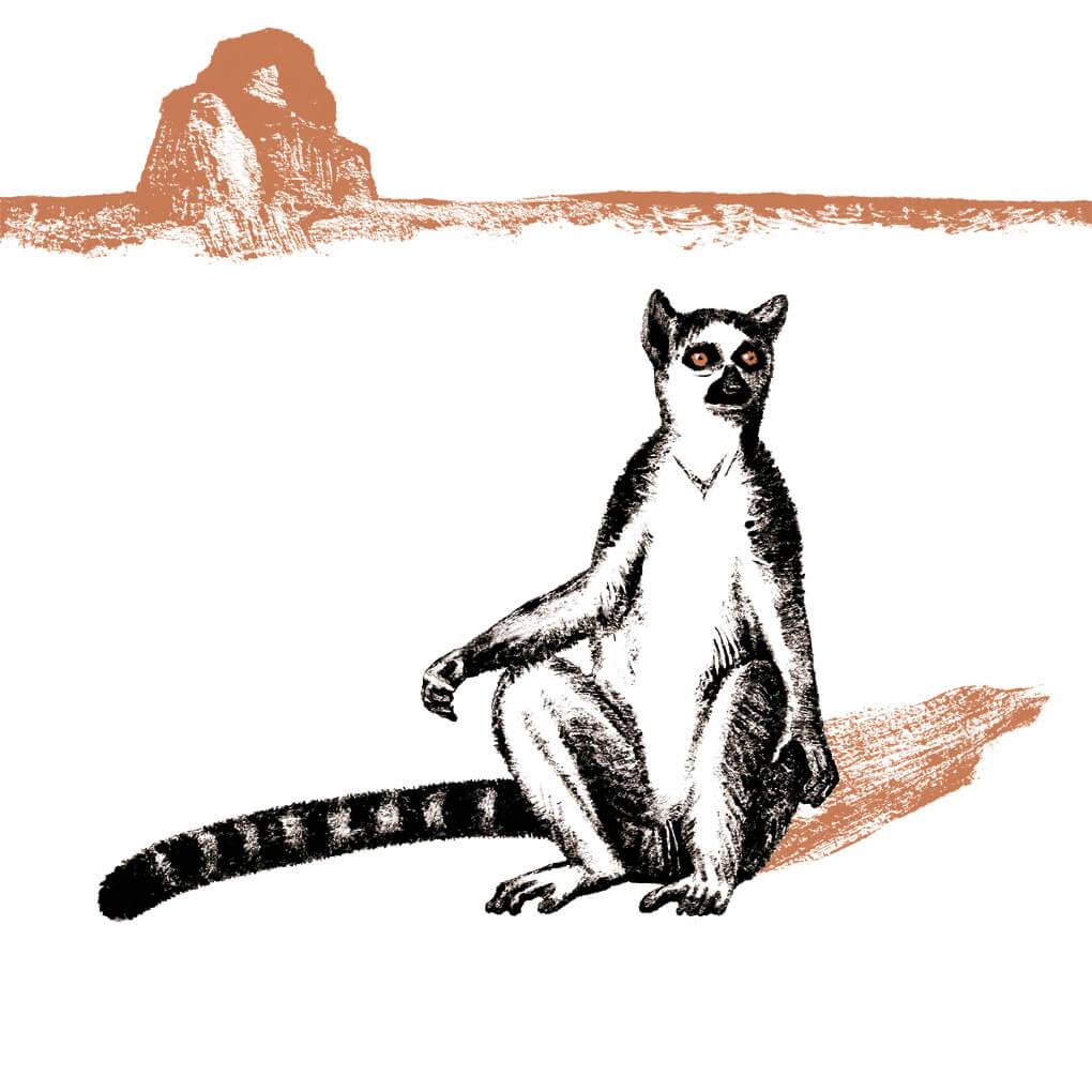 maki catta parc animalier de Branféré