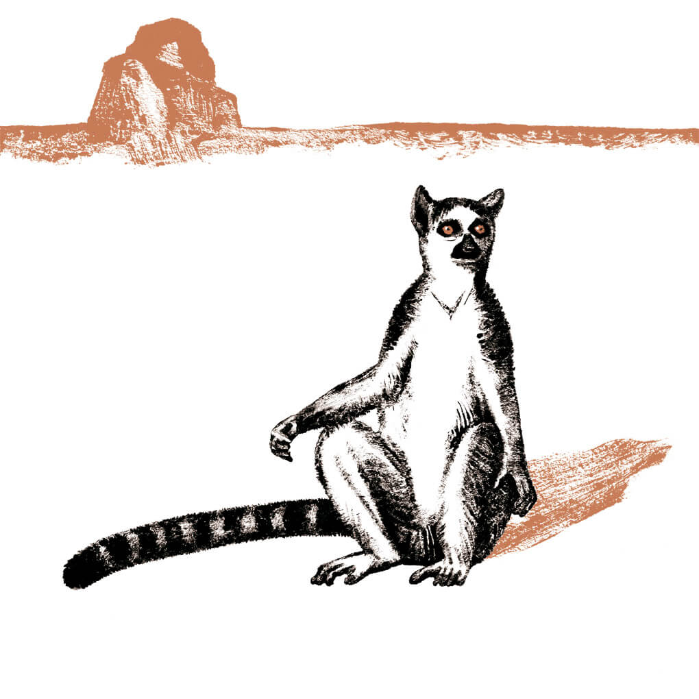 Le maki catta parc animalier de Branféré