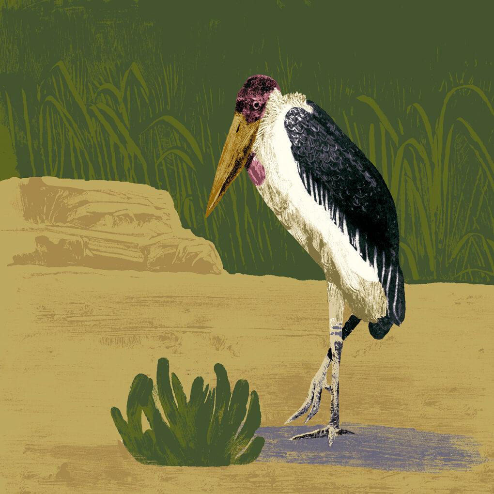 marabout d'Afrique parc animalier de Branféré