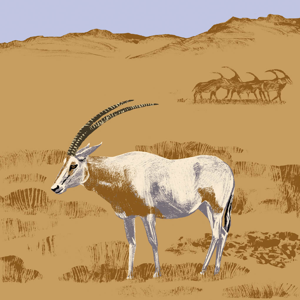 L'oryx algazelle parc animalier de Branféré