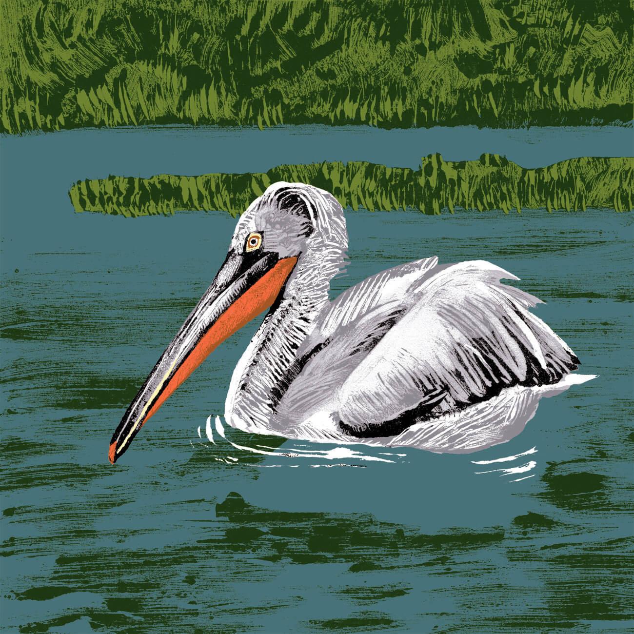 pelican frise branfere