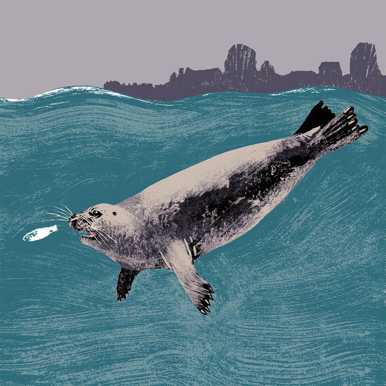 phoque veau marin branfere