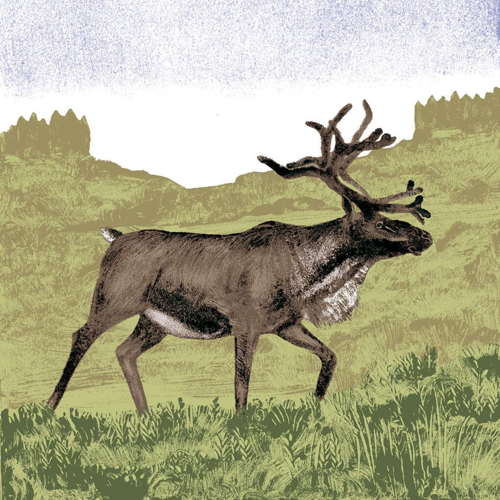 renne parc animalier de Branféré