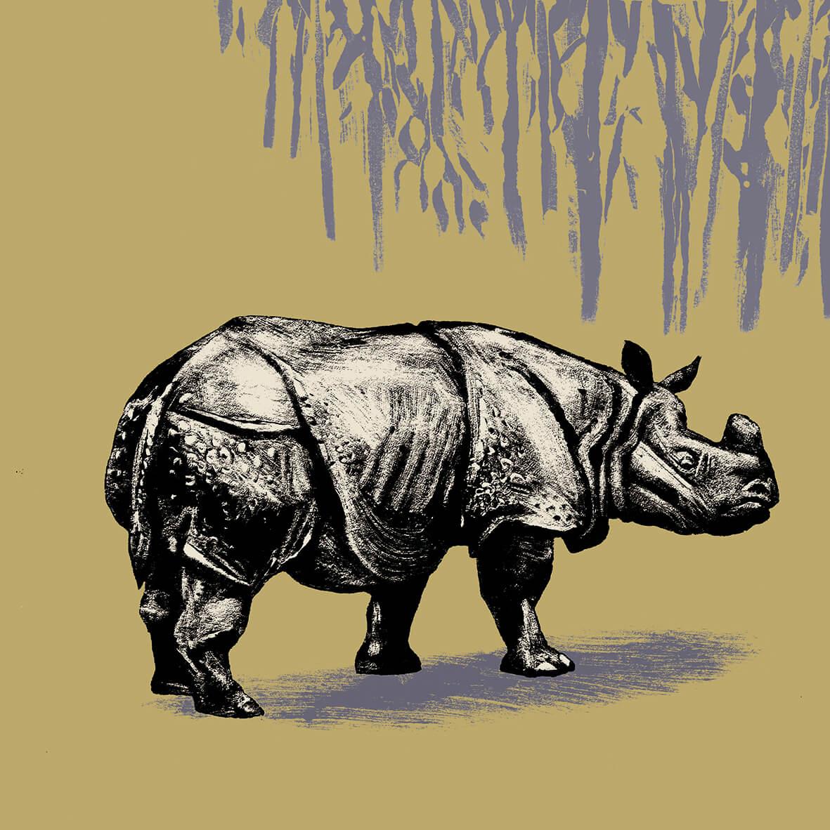 Le rhinocéros indien parc animalier de Branféré
