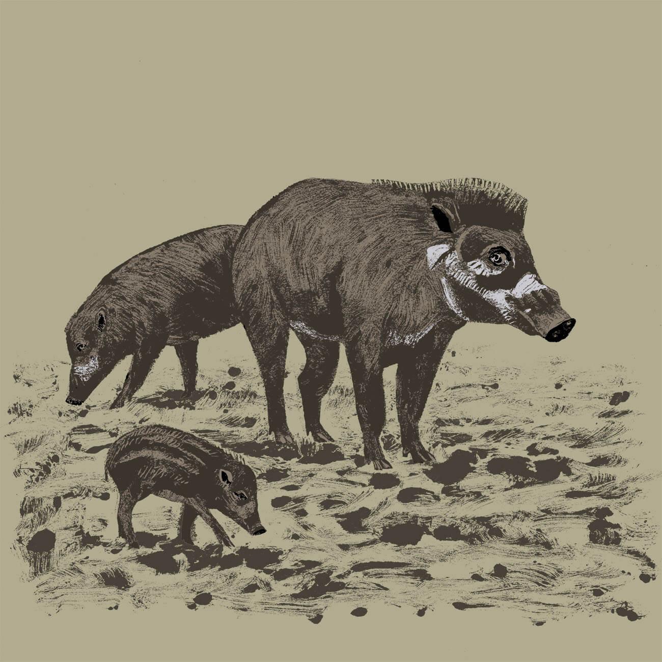 sanglier des Visayas parc animalier de Branféré