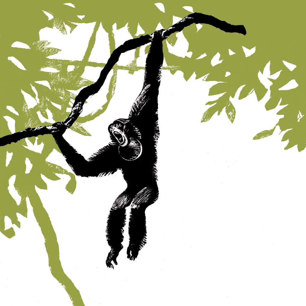 gibbon Siamang parc animalier de Branféré