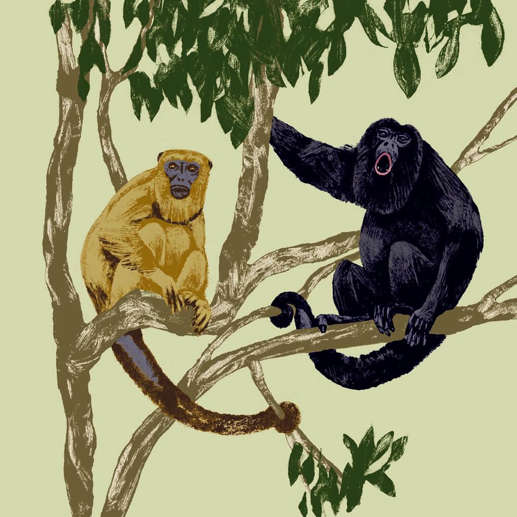 singe hurleur noir parc animalier de Branféré