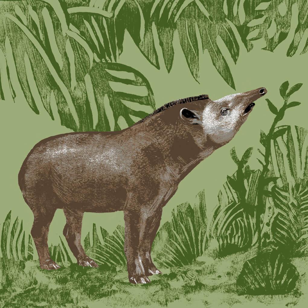 Le tapir terrestre parc animalier de Branféré