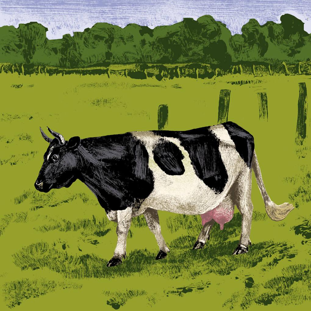vache pie noir parc branfere