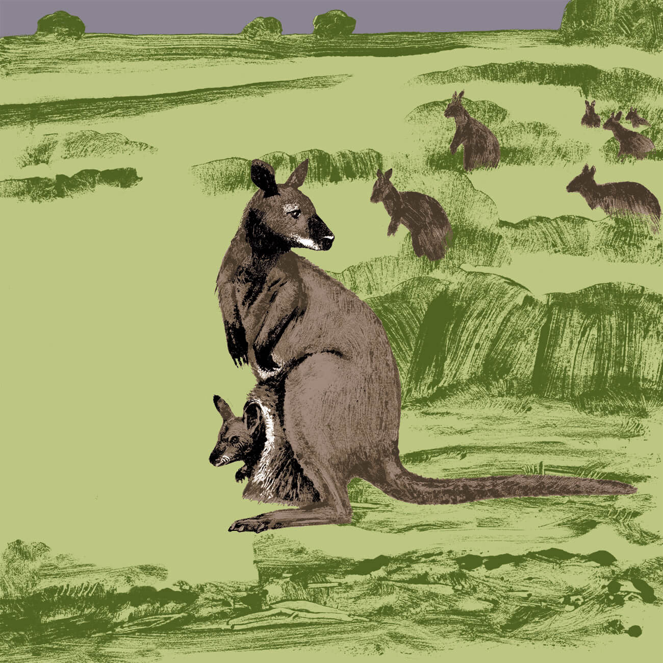 wallaby de Bennett parc animalier de Branféré