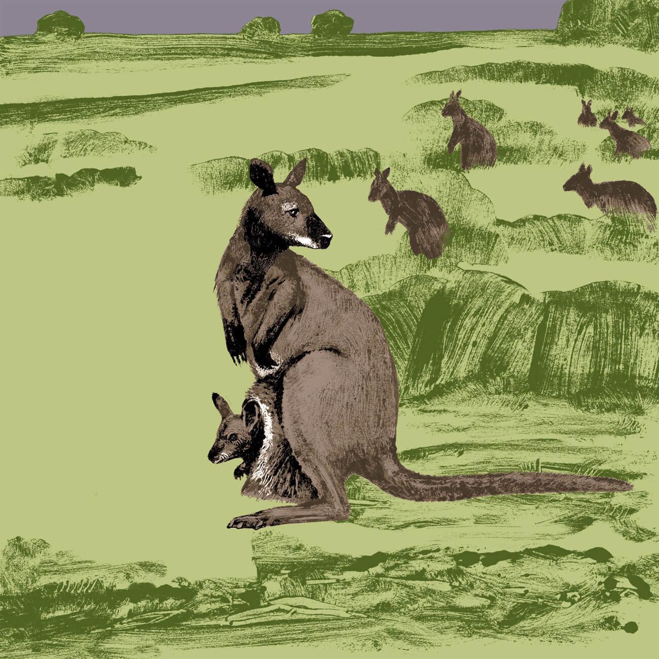 wallaby de bennett branfere