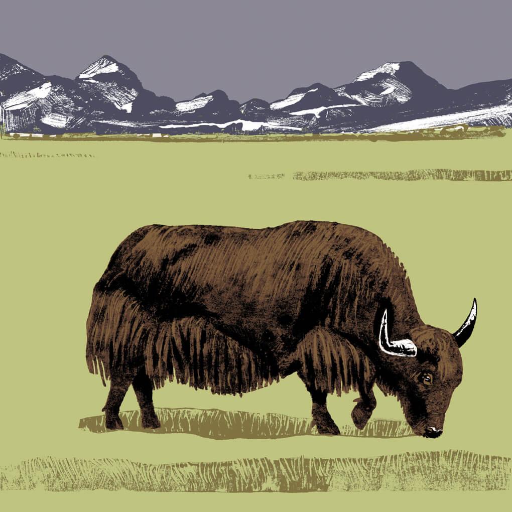 yack parc animalier de Branféré