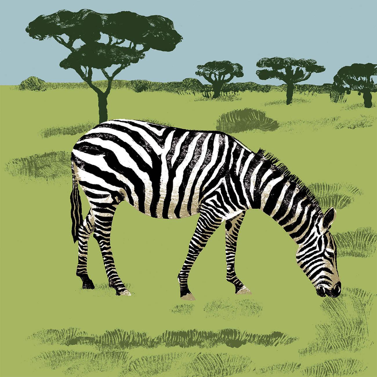 zebre branfere