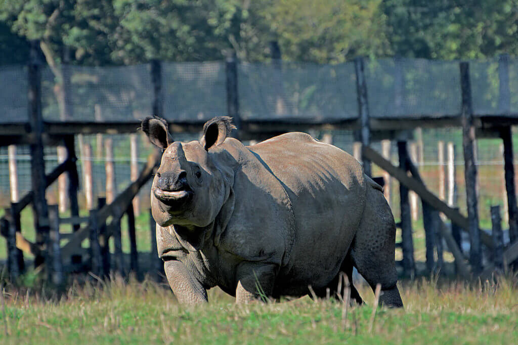 Les journées Rhinocéros