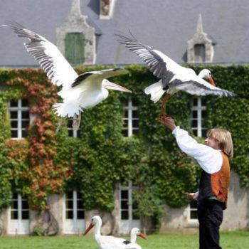 Spectacle oiseaux Branféré