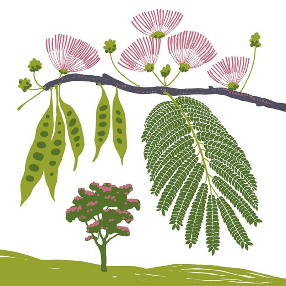 arbre à soie parc botanique de Branféré