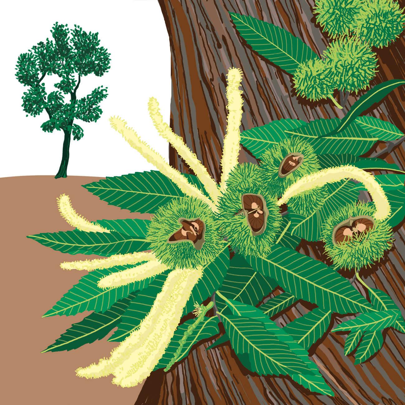 châtaignier commun parc botanique de Branféré