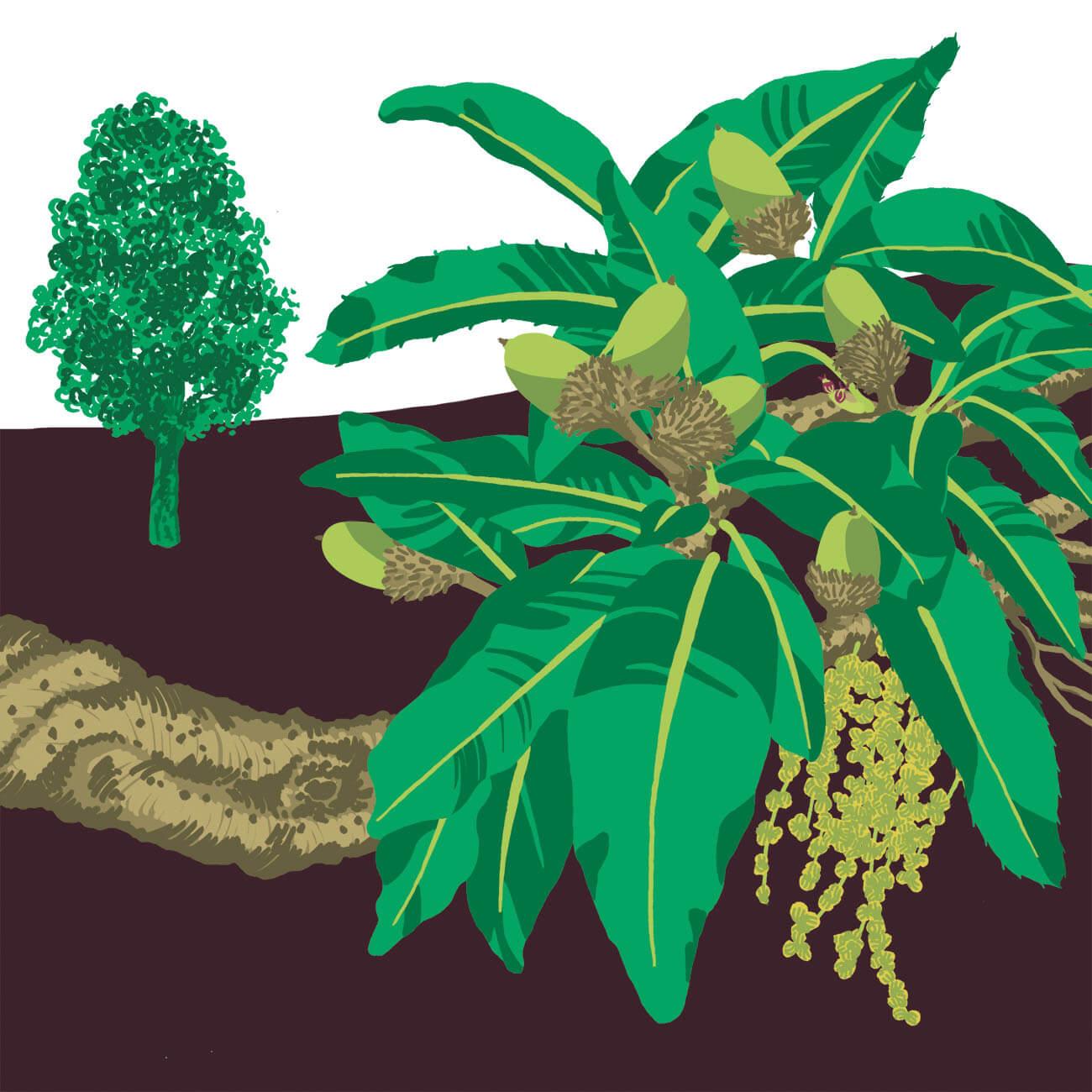 chêne liège parc botanique de Branféré