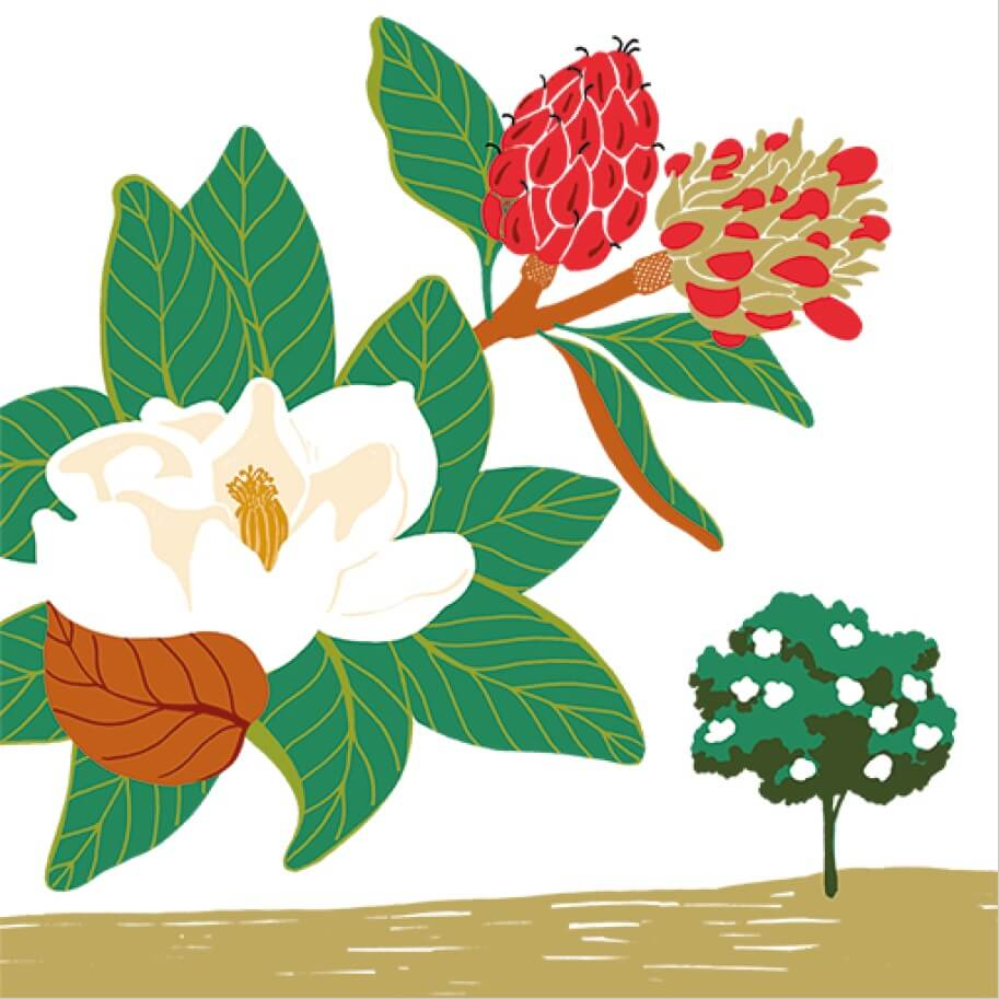 Le magnolia à grandes fleurs parc botanique de Branféré