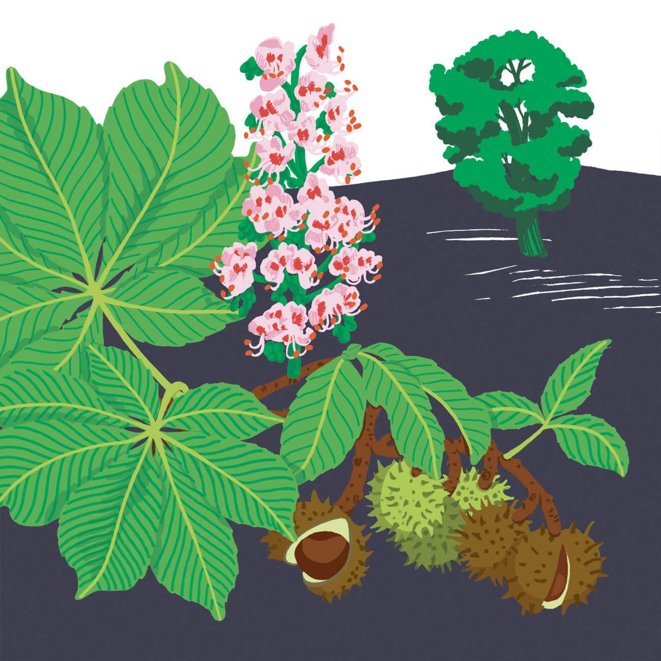 marronnier d'Inde parc botanique de Branféré